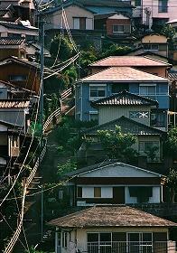 「朝の散歩道」 井島加米男